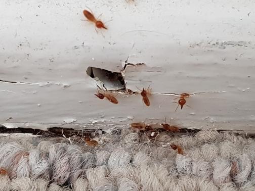 Sunshine Coast Termite & Pest Control Total Termite & Pest Control