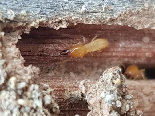 Pest Control Services Total Termite & Pest Control