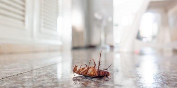 Buderim Termite & Pest Control Total Termite & Pest Control