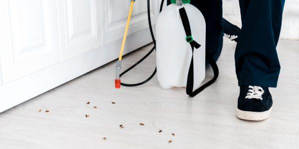 Sandgate Termite & Pest Control Total Termite & Pest Control