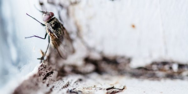 Clontarf Termite & Pest Control Total Termite & Pest Control